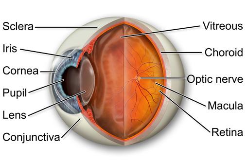 Eye Diseases A-Z